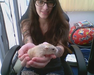 Introducing my Russian Dwarf Hamster, Snowy. /W funny cc. - introducing my russian dwarf hamster snowy w funny cc