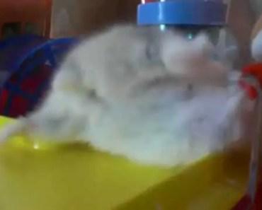 my cute hamster popcorn. funny - my cute hamster popcorn funny