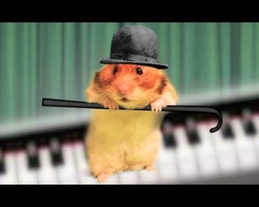'My Nuts Song' - Music Video - The Talking Hamster - my nuts song music video the talking hamster