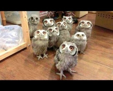 Owl - A Funny Owls And Cute Owls Compilation    NEW - owl a funny owls and cute owls compilation new