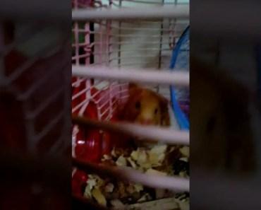 Silent hamster yells - silent hamster yells
