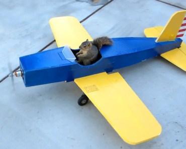 Squirrel Steals Airplane - squirrel steals airplane