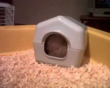 stewie the fat hamster!!! VERY funny!!! - stewie the fat hamster very funny