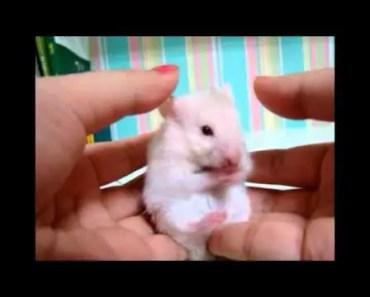 Surprised!!! A very cute hamster... - surprised a very cute hamster