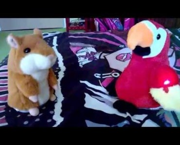 talking hamster and talking parrot toy - talking hamster and talking parrot toy