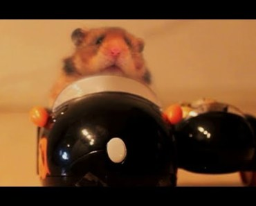 The Talking Hamster - 'Drive' - the talking hamster drive