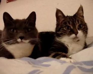 The two talking cats - the two talking cats