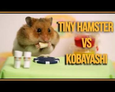 Tiny Hamster vs Kobayashi (Ep. 3) - tiny hamster vs kobayashi ep 3