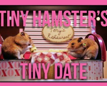Tiny Hamster's Tiny Date (Ep. 5) - tiny hamsters tiny date ep 5