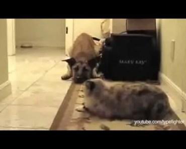 You Shall Not Pass, Dog - you shall not pass dog
