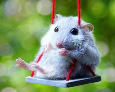 Funny Hamster Compilation - 1509692989 funny hamster compilation