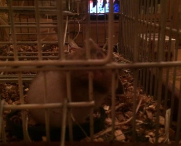 Funny Hamster - 1509839882 funny hamster