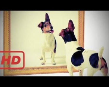 Puppies And Dogs Vs Mirror! Funny Compilation! - 1509953610 puppies and dogs vs mirror funny compilation
