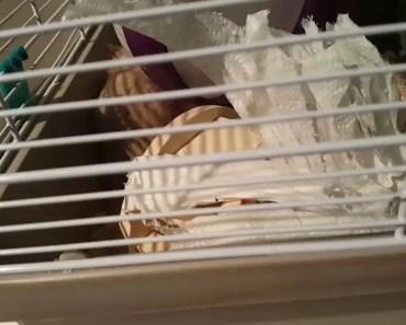 Funny hamster - 1511057526 funny hamster