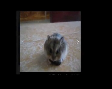 A normal day Hamster - Funny , funnt and funny - a normal day hamster funny funnt and funny