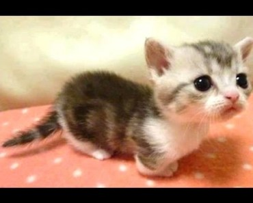 Baby Animals - A Cute Animal Videos Compilation    NEW HD - baby animals a cute animal videos compilation new hd