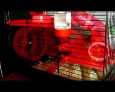 Crazy funny hamster - crazy funny hamster