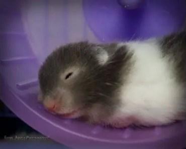 Cute-Hamster-Funny MOment - cute hamster funny moment