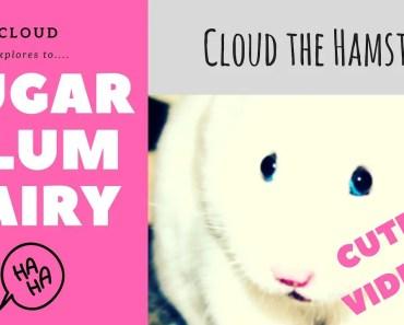 Cute Hamster Video - Dance of the Sugar Plum Fairy | Cute and funny hamster videos - cute hamster video dance of the sugar plum fairy cute and funny hamster videos