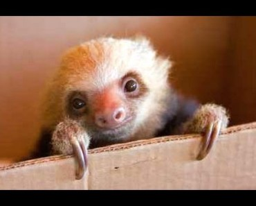 Cute Sloth - A Funny And Cute Sloth Videos Compilation 2015 - cute sloth a funny and cute sloth videos compilation 2015