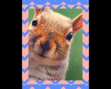 funny hamster 8085 - funny hamster 8085