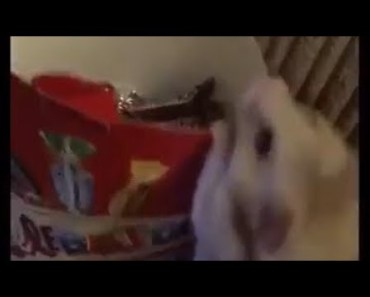 Funny hamster celebrating celebrity get me out of here! - funny hamster celebrating celebrity get me out of here
