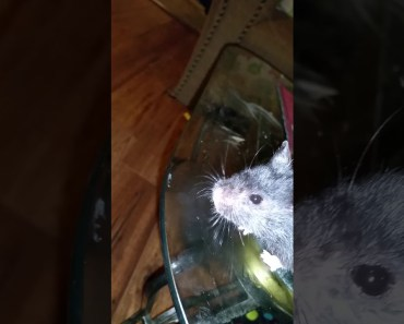 Funny hamster geo - funny hamster geo