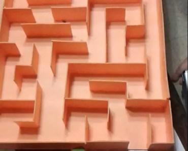 funny hamster through labyrinth - funny hamster through labyrinth