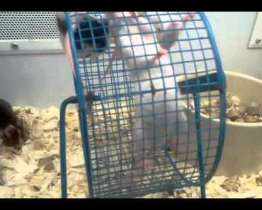 Funny mice - funny mice