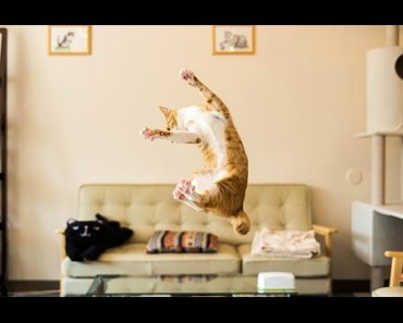 Funny Scared Cats Videos Compilation - Cute And Timid Animals - funny scared cats videos compilation cute and timid animals