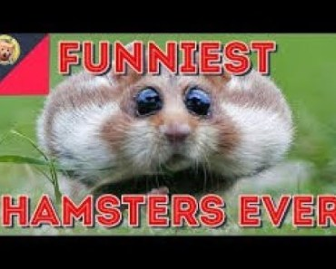 Funny Video Of hamster dashing - funny video of hamster dashing