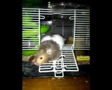 Hamster escape!!! - hamster escape