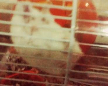 HAMSTER Olympics! - hamster olympics