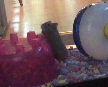 Hamster Series || ep.35 - hamster series ep 35