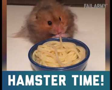 Hamster tims - hamster tims
