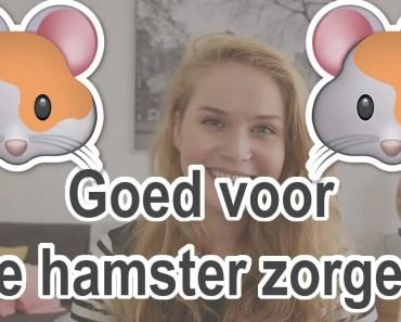 Hoe zorg je voor een Hamster? | Hamsters voor beginners #2 | BMDPets - hoe zorg je voor een hamster hamsters voor beginners 2 bmdpets