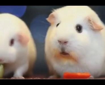 Poor Traumatized hamster (Hello Darkness)  Vine Compilation #1 [CUTE] [ MUST WATCH]   [Hamsters] - poor traumatized hamster hello darkness vine compilation 1 cute must watch hamsters