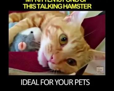 Talking Hamster - Now & Trendy - talking hamster now trendy