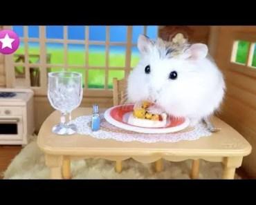 Te presento a COCO la nueva mascota de Historias de Juguetes Funny Hamsters Graciosos - te presento a coco la nueva mascota de historias de juguetes funny hamsters graciosos