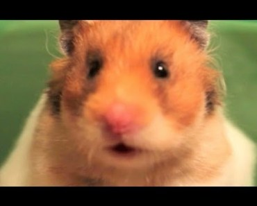 The Adventures of Hammy - The Talking Hamster - 'That's Nuts' - the adventures of hammy the talking hamster thats nuts