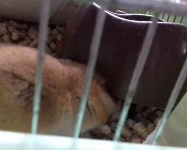 THEODORE! funny hamster - theodore funny hamster
