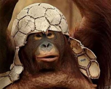 Top Funny Monkey Videos Compilation - Cute Animals - top funny monkey videos compilation cute animals