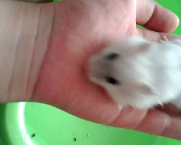 Funny hamster ! - 1512876539 funny hamster
