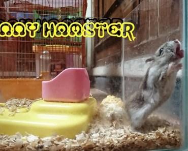 Funny Hamster - 1514366476 funny hamster