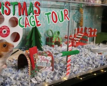 BASILS CHRISTMAS CAGE! Hamster cage tour - basils christmas cage hamster cage tour