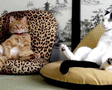 Cats Acting Like Humans Are So Funny - Best Video Compilation Of Cats Behaving Like Humans - cats acting like humans are so funny best video compilation of cats behaving like humans