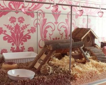 CLEANING MY HAMSTER CAGE - cleaning my hamster cage