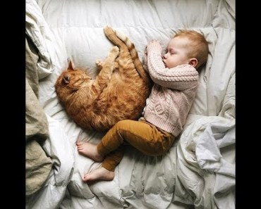 Cute Babies And Cats In The Same Bed - cute babies and cats in the same bed
