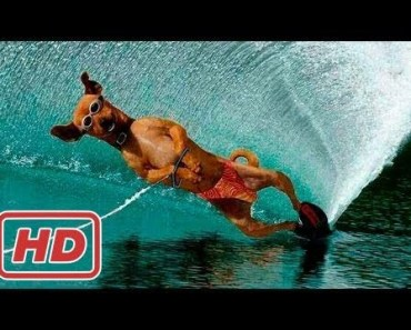 Funny and Cute Animals - Funny Animal Videos Compilation December 2016 - funny and cute animals funny animal videos compilation december 2016