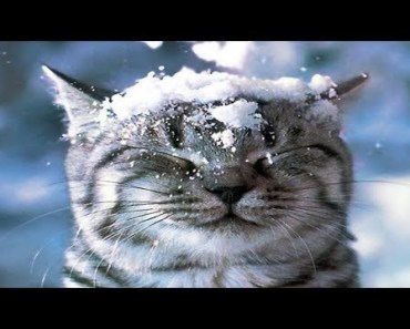 Funny Cats Playing With Snow! - funny cats playing with snow
